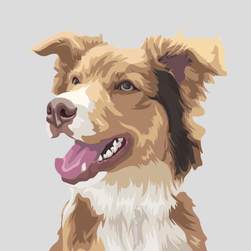 pet portrait illustration framed trends